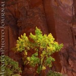 Kitchen Mesa Tree