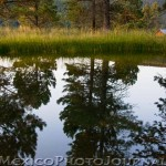 Pond at Valles Caldera