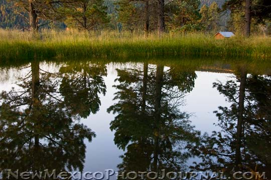 trees reflected in a pond at Valles Caldera