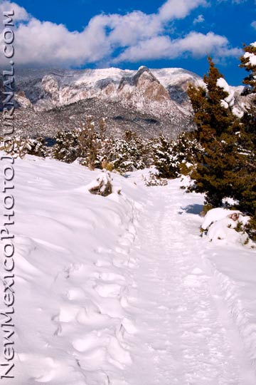 snow in the Sandia foothills, january 2010