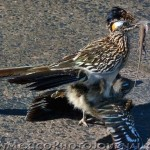 Mr. & Mrs. Roadrunner