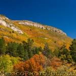 Fall Color in the Sandias