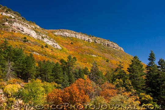 Mountainside covered with fall colors