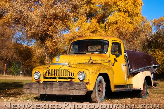 a yellow pickup truck blends with fall foliage along the bosque in Corrales