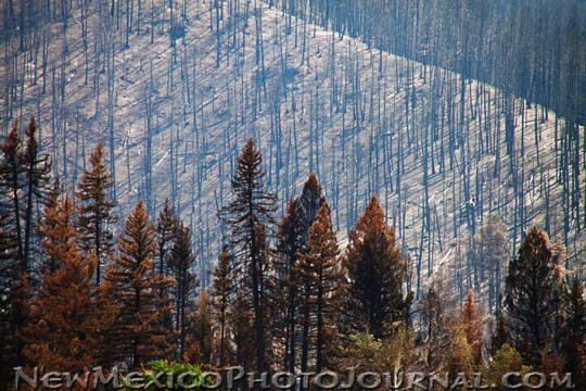 A vast hillside of completely burned trees