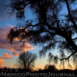 Bosque Sunset