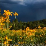 Thunderstorm and Wildflowers