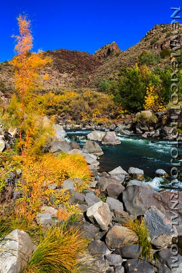 Fall colors in the Rio Grande Gorge