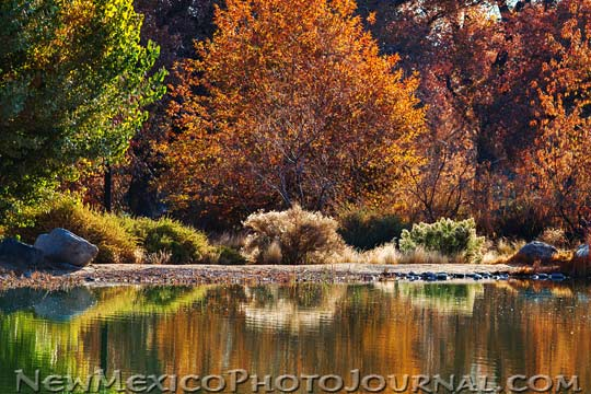 Fall foliage reflects in the water at Tingley Beach, Albuquerque