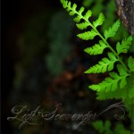 High Altitude Ferns