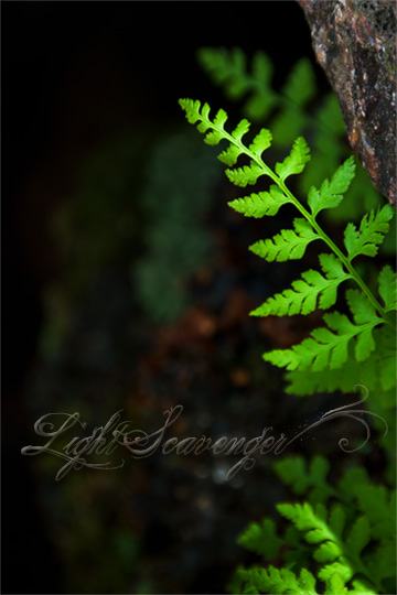 Tiny Ferns