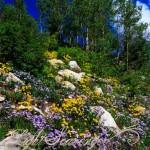 Ellis Trail Wildflowers