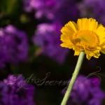 April Wildflowers