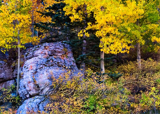 Fall Foliage in the Sandias