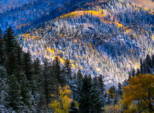 Yellow Aspens and Snow on the Taos Ski Valley Road