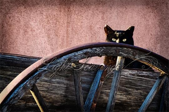 Wary Cat