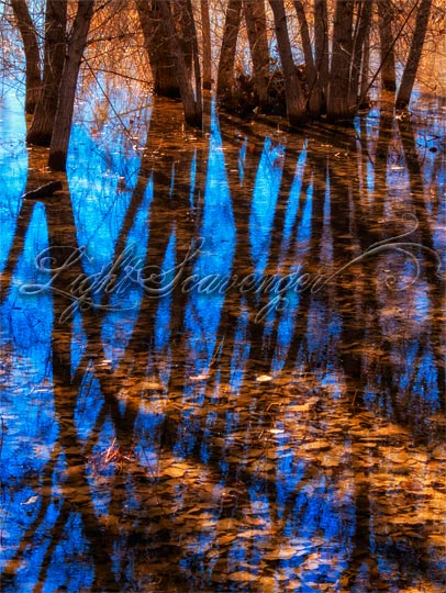Cottonwood leaves, water, reflections, and shadows at Bosque del Apache.
