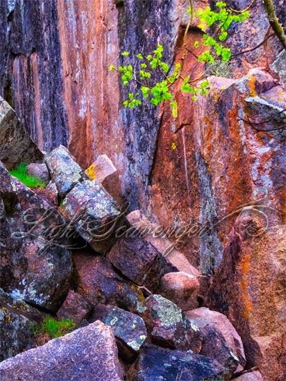 Rocks, Lichen, Leaves