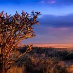 Golden Hour in the Sandia Foothills