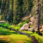 Cattle amble along the East Fork of the Jemez River