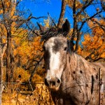 Horse in the Jemez Valley