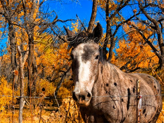 Shadows of dried sunflowers fall on a horse in the Jemez Valley