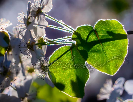 Backlit Flowers and Leaves