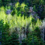 Spring in the Sandia Mountains