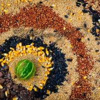 Solstice Seed Mandala