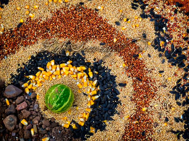 Seed Mandala Detail