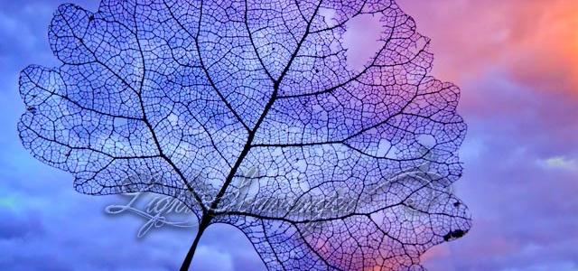 Lacey Cottonwood Leaf