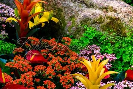 Flower Show, Rio Grande Botanic Garden