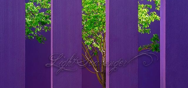 Purple Wall in Spring