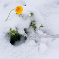 Late Spring Snow