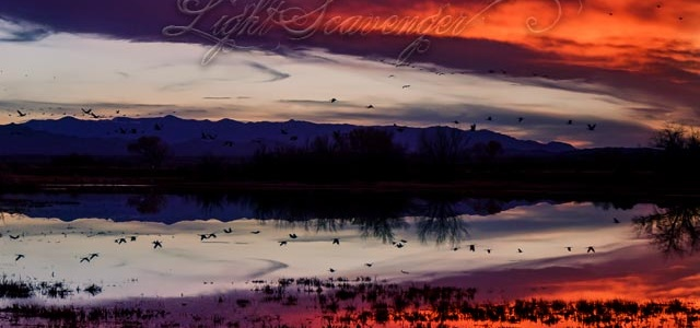 Pond at sunset, with migrating birds