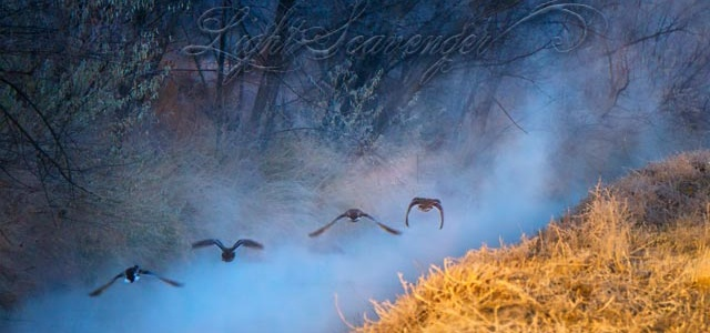 Bosque Mist and Ducks