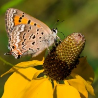 Butterfly and Mexican Hat