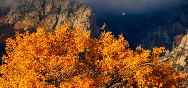 Fall Cottonwood Leaves and Distant Tram