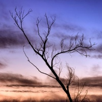 Bosque Tree at Sunset
