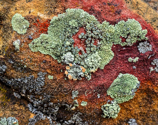 Lichen on Sandstone