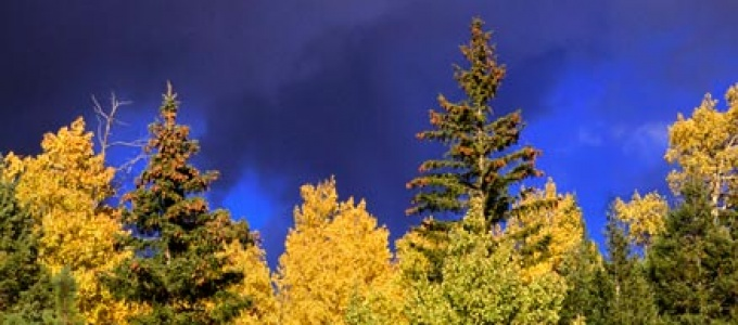 Storm Clouds and Aspens