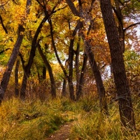 Bosque Trail in Fall