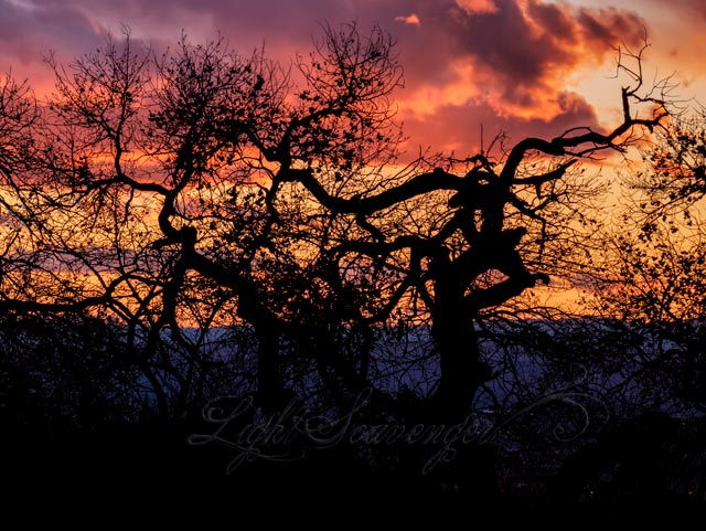 Silhouetted Tree at Sunset