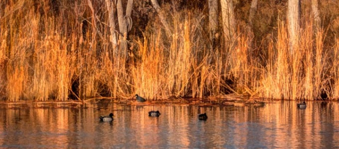 Bosque Pond at Golden Hour