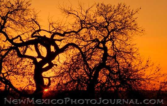 Medusa the Tree