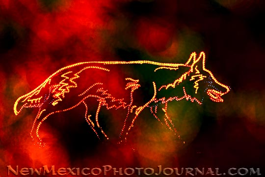 Coyote Dressed in Lights