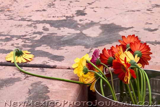 flowers knocked over by the wind