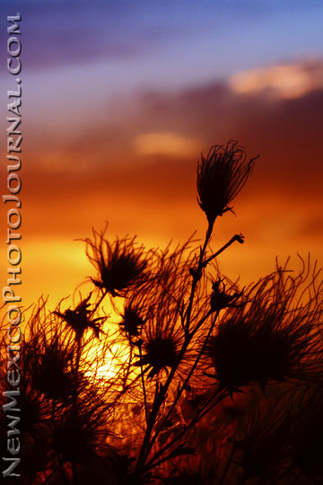 apache plume and sunset