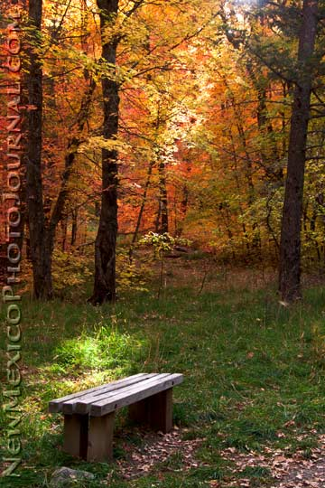 Rocky Mountain maples surround a bench in Fourth of July Canyon, in the Manzano mountains.