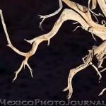 Ojito Tree Branches